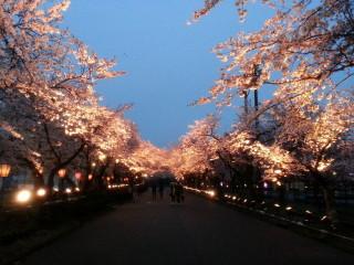 sakura_tomisushi_tommy.jpg